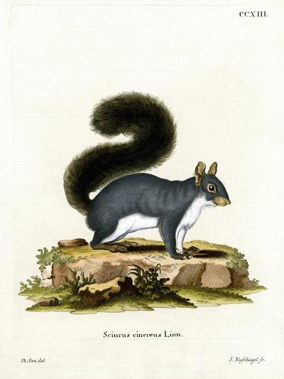Eastern Gray Squirrel--Giclee Print