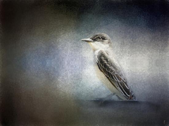 Eastern Kingbird Portrait-Jai Johnson-Giclee Print