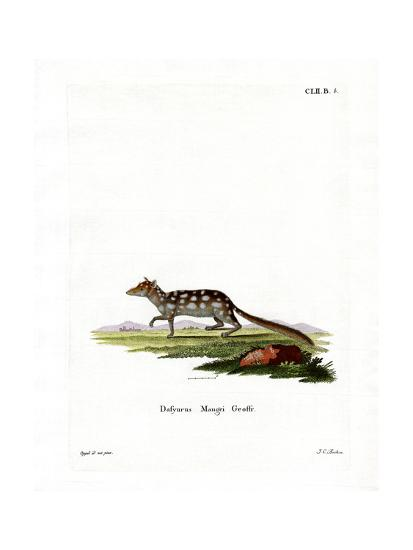 Eastern Quoll--Giclee Print
