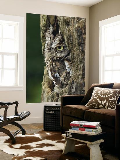 Eastern Screech Owl, Michigan, USA-Adam Jones-Giant Art Print