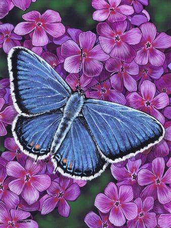 https://imgc.artprintimages.com/img/print/eastern-tailed-blue_u-l-q1bgei00.jpg?artPerspective=n