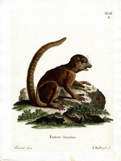 Eastern Woolly Lemur--Giclee Print