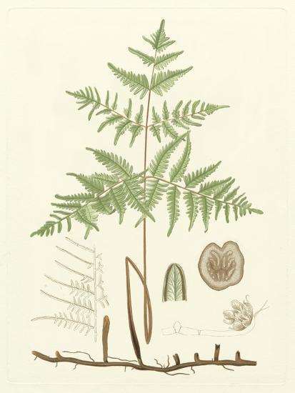 Eaton Ferns III-Daniel C^ Eaton-Art Print