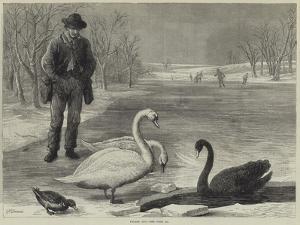 Frozen Out by Ebenezer Newman Downard