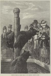 Receiving Visitors on Easter Monday at the Zoological Society's Gardens by Ebenezer Newman Downard