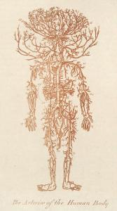 The Arteries of the Human Body by Ebenezer Sibly