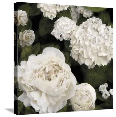 Ebony Flowers-Alan Lambert-Stretched Canvas Print