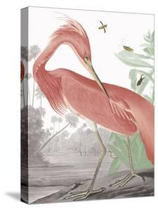 Louisiana Heron - Tropical by Eccentric Accents
