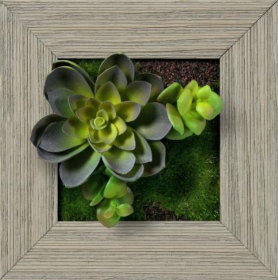Echeveria Double Jade Square - Farmhouse Gray--Dimensional Product