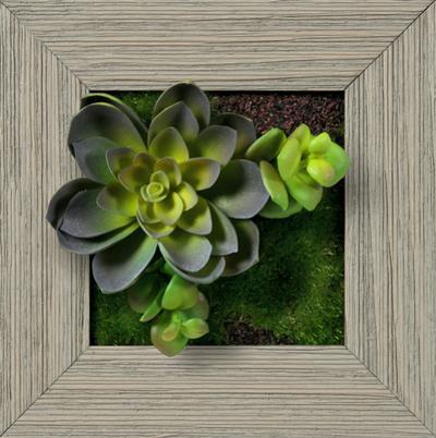 Echeveria Double Jade Square - Farmhouse Gray