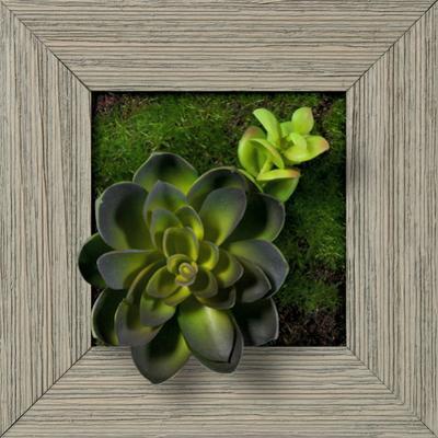 Echeveria Single Jade Square - Farmhouse Gray