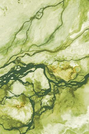 Ecology II-Peter Adams-Giclee Print