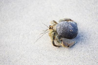 https://imgc.artprintimages.com/img/print/ecuador-galapagos-islands-genovesa-darwin-bay-beach-hermit-crab-on-the-beach_u-l-q13bcap0.jpg?p=0