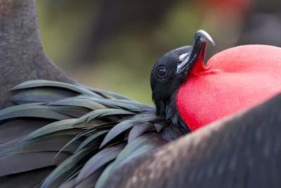 https://imgc.artprintimages.com/img/print/ecuador-galapagos-islands-genovesa-darwin-bay-beach_u-l-q13bsns0.jpg?p=0