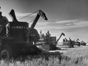 Combines Being Used to Harvest Wheat by Ed Clark