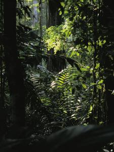 A Rain Forest Scene in the Costa Rican Forest by Ed George