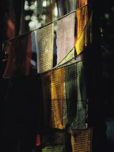 Buddhist Prayer Flags Hang in the Trees in Darjeeling by Ed George