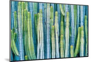 DETAIL VIEW OF THE CARDON CACTUS IN SUMMER WITH RICH BLUE GREEN AND TORQOUISE COLORS by ED Reardon