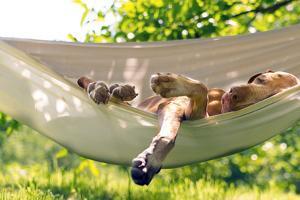Relaxing Dog by Eddie Dean