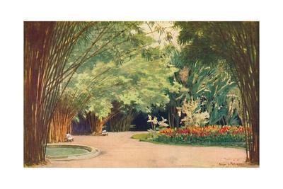 'A Bamboo Grove - Botanical Gardens', 1914