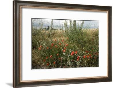 Edge of Field with Wildflowers-Paul Harcourt Davies-Framed Photographic Print