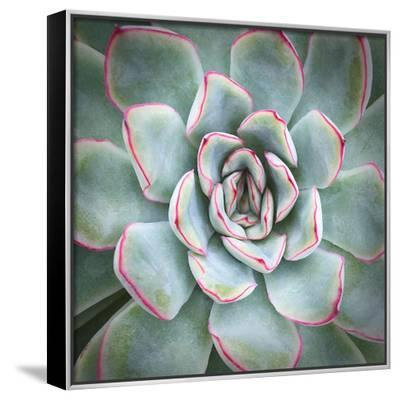 Edged in Red-Jan Bell-Framed Canvas Print