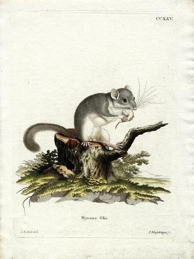 Edible Dormouse--Giclee Print