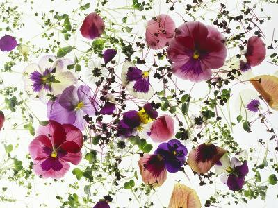 Edible Flowers and Sprouts-Luzia Ellert-Photographic Print