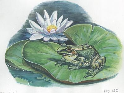 Edible Frog Rana Esculenta or Pelophylax Esculentus--Giclee Print
