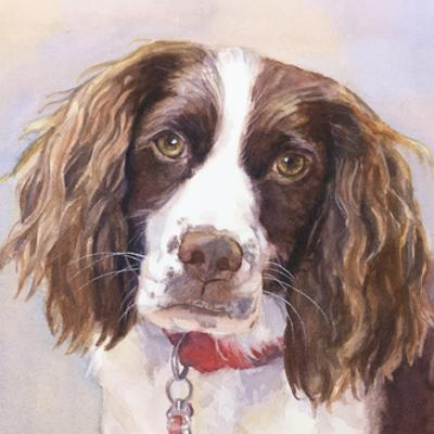 Georgia Springer Spaniel by Edie Fagan