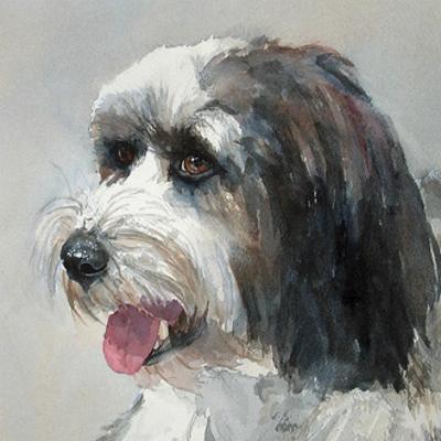 Harlan Tibetan Terrier by Edie Fagan