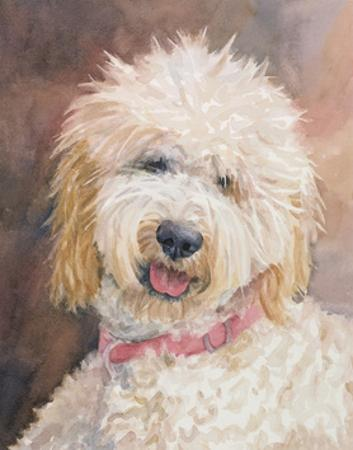 Honey Goldendoodle by Edie Fagan