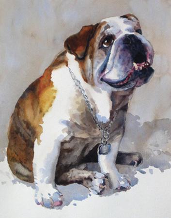 Major Wembly E. Bull Dog by Edie Fagan