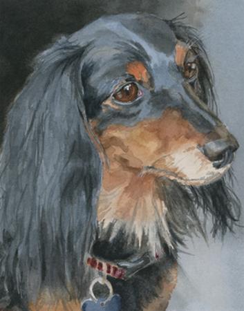 Natalie Long-haired Dachshund by Edie Fagan