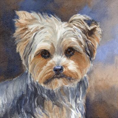 Sadie Belle Yorkshire Terrier by Edie Fagan