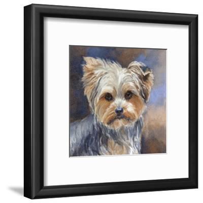 Sadie Belle Yorkshire Terrier