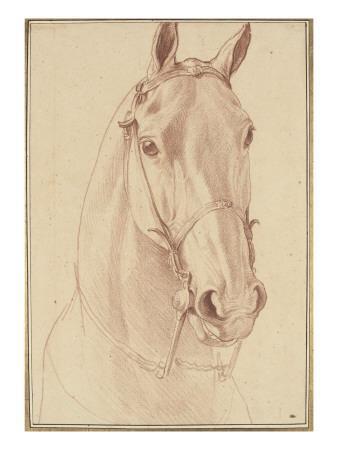 Encolure et tête de cheval bridée de face