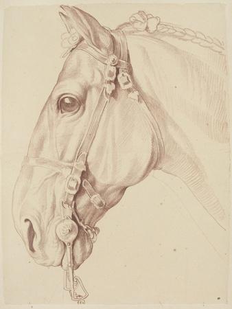 Tête de cheval bridée, tournée vers la gauche