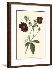Florilea I by Edmonston & Douglas