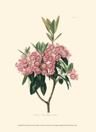 Flowering Shrub I