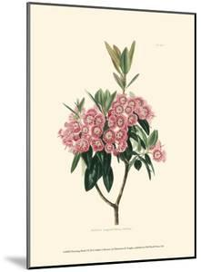 Flowering Shrub I by Edmonston & Douglas