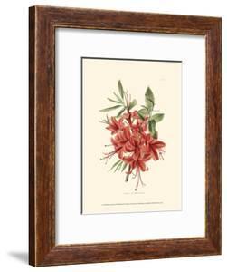 Flowering Shrub II by Edmonston & Douglas