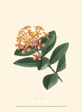 Flowering Shrub III