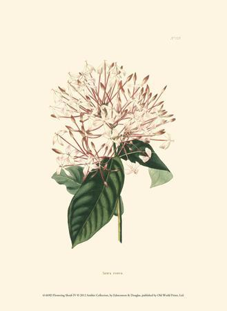 Flowering Shrub IV