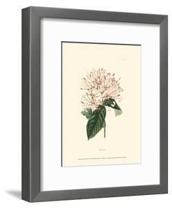 Flowering Shrub IV by Edmonston & Douglas