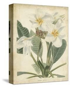 Tropical Floral II by Edmonston & Douglas