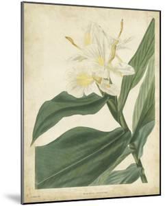 Tropical Floral IV by Edmonston & Douglas