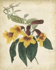 Tropical Floral VI by Edmonston & Douglas