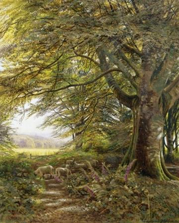 A Wooded Landscape with Foxgloves by Edmund George Warren