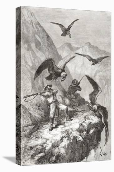 Édouard François André and Companion Being Attacked by Condors Near Calacali--Stretched Canvas Print